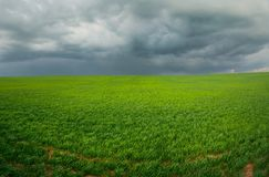 Field With A Bright Green Grass Under The Sky With Large Dark Storm Clouds Stock Photography