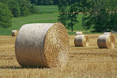 Field With Bales Of Hay Royalty Free Stock Image