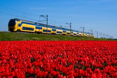 Free Field With Red Tulips And Passing Train On Background Royalty Free Stock Images - 186735409