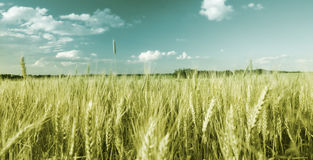 Field With Sky Stock Images