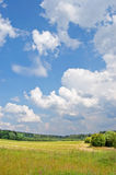 Field and wood. Yellow field with the burnt out grass against green wood and the blue sky with white clouds royalty free stock photos