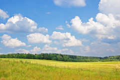 Field and wood. Yellow field with the burnt out grass against green wood and the blue sky with white clouds Stock Photos