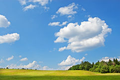 Field and wood. Yellow field with the burnt out grass against green wood and the blue sky with white clouds Stock Image