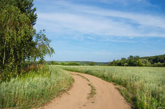 Field and wood. Rural twisting dirt road going among a green field royalty free stock images