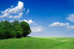 Field and wood Royalty Free Stock Image