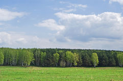 Field and wood in the distance. Green field, the blue sky with white clouds and green wood in the distance Stock Images