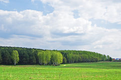Field and wood in the distance. Green field, the blue sky with white clouds and green wood in the distance royalty free stock photo