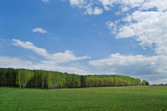Field and wood in the distance. Green field, the blue sky with gray clouds and green wood in the distance Stock Photos