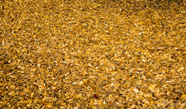 Field wooden chips Royalty Free Stock Photo