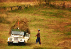 Field work. Farmer harvested hay from the field Royalty Free Stock Photography