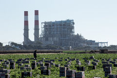 Field Worker Picking Produce in Front of Power Plant Stock Photo