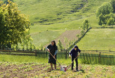 Field workers in Bucovina. Two hard-working women in the fields, on a hot summer day, in Bucovina, northern Romania Stock Photos