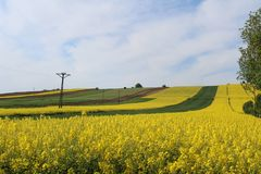 Field, Yellow, Canola, Rapeseed stock image