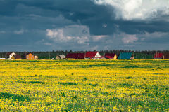 Field of yellow dandelions against the cloudy sky. Royalty Free Stock Images