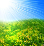 Field of yellow flower Stock Photography