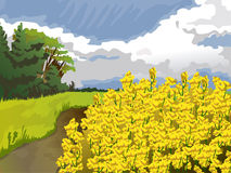 Field with yellow flowers in blue sky and white clouds, trees and green grass. Image of nature vector. Stock Photography