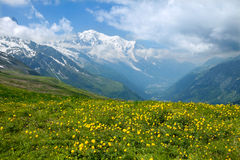 The field of yellow flowers in French Alps Royalty Free Stock Images