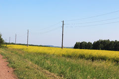 Field with yellow flowers and poles with power lin Royalty Free Stock Images