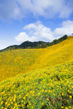 Field of yellow flowers. Situated on the foothills of the mountains Cloud covered the sky Stock Photo
