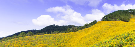 Field of yellow flowers. Situated on the foothills of the mountains Cloud covered the sky Stock Images