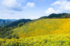 Field of yellow flowers Royalty Free Stock Photos