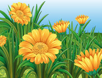 Field of yellow flowers in springtime. Illustration Stock Photos