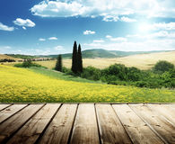 Field of yellow flowers Tuscany Stock Photos