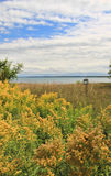 Field of Yellow Goldenrod and Lake Royalty Free Stock Photos