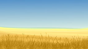 Field of yellow grass against blue sky. Vector horizontal illustration: field of yellow grass against blue sky in hot day Stock Images