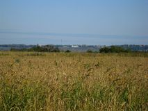 Field and yellow grass Royalty Free Stock Image