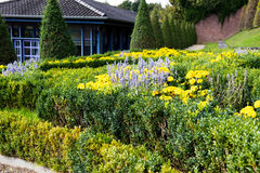 Field of yellow and purple flowes in public park Royalty Free Stock Images
