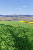Field of yellow rape flowers on a background of mountains Jura in France in the spring Royalty Free Stock Photos
