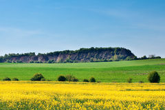 Field of yellow rape and hills Stock Images