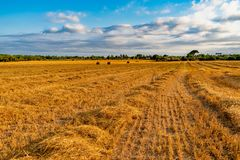 Field of yellow straw stock images