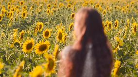 Field of yellow sunflowers, wind girl waving her hair, child looks at sunflower in summer day, stock video footage