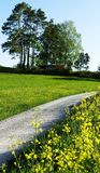 Field, Yellow, Tree, Vegetation stock images