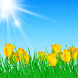 Field of yellow tulips with bright sun. Vector illustration of field of yellow tulips with bright sun Stock Images