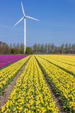 Field of yellow tulips and a wind turbine Stock Image