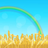 Field with yellow wheat and rainbow. On a blue background Stock Images