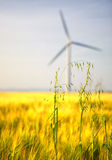Field of yellow wheat with wind turbine Royalty Free Stock Photos