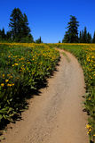 Field of Yellow Wildflowers and Trail. Field of yellow wildflowers flowers and trail Royalty Free Stock Images