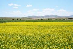 Field. Yonca Tarlası, Bünyan, Kayseri Royalty Free Stock Photo