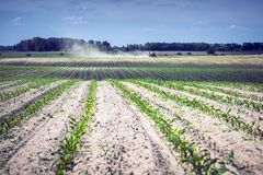 Field of young corn, at the end of which a self-propelled sprayer is deployed.  Stock Image