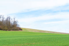 Field with young crops Royalty Free Stock Photos