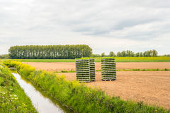 Field with young plants in stacked crates Stock Images