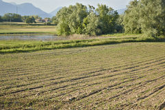 Field with young sprouts. Of corn, Lombardy Italy May 2014 Stock Images