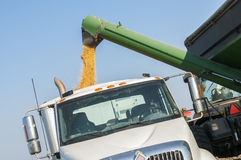 Fieldcorn harvest Stock Photography