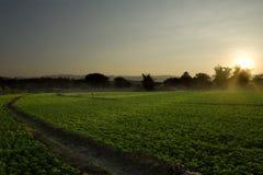 fields арахис Стоковые Изображения