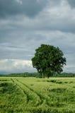 fields вал Стоковое Изображение