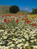 fields весеннее время Стоковые Изображения